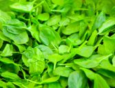 Have you tried... baby spinach?